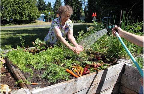 Lynnwood Community Garden with a gardener